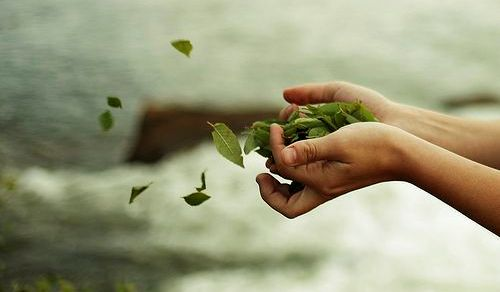 mão-com-folhas