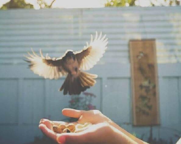 liberdade-amor-próprio