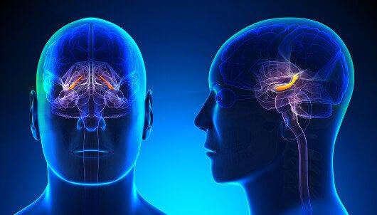 cérebro-reconstrói-eventos-passados