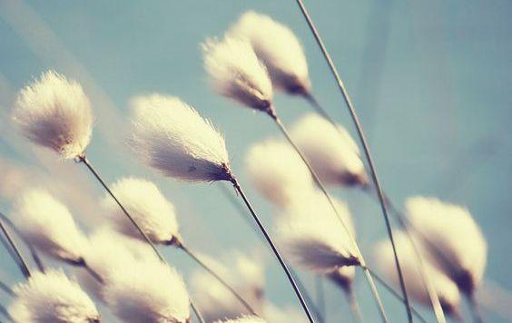 plantas-vento