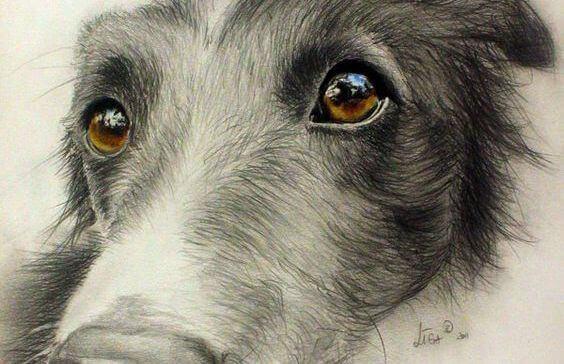 olhar-cachorro-animal-de-estimação