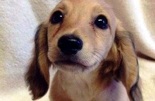 Os olhos de um animal têm o poder de falar uma língua única