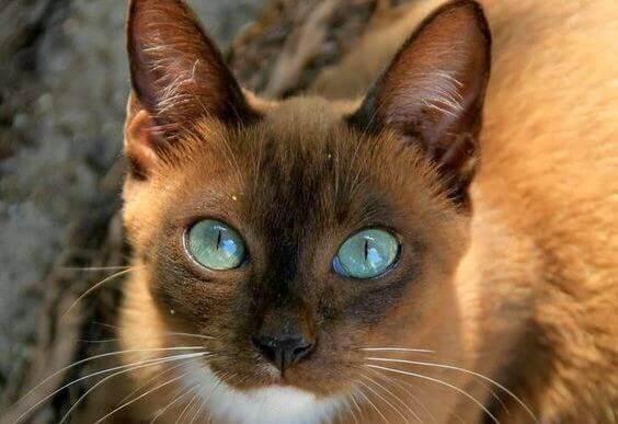 olhos-gato-animal-de-estimação