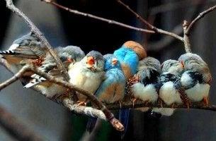 Pássaros representando