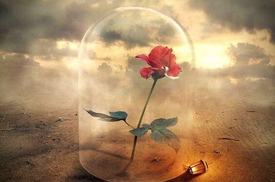 rosa-delicadeza-pessoas-maravilhosas