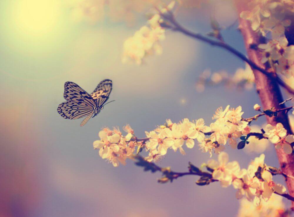 borboleta pousando em flor