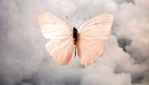 borboleta-representando-luto