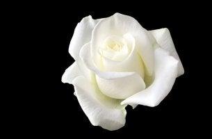 Sophie Scholl, a jovem que enfrentou Hitler com uma rosa branca