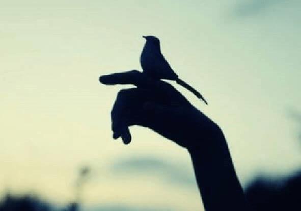 passarinho-representando-apego