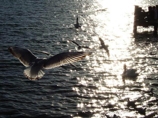 gaivotas-voando