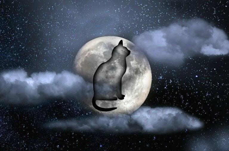 gato-noite