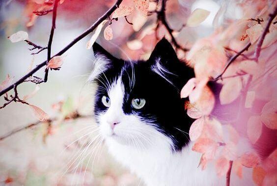 A história do gato malhado e a andorinha Sinhá