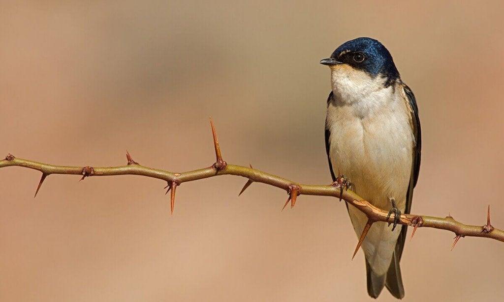 historia-do-passarinho