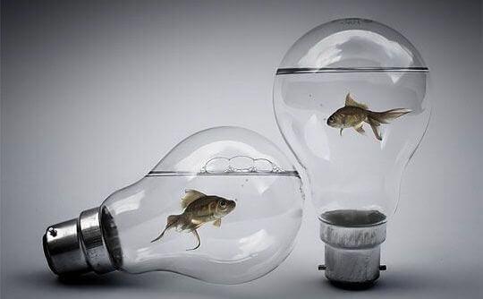 peixes-em-lampadas