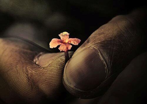 maos-com-flor