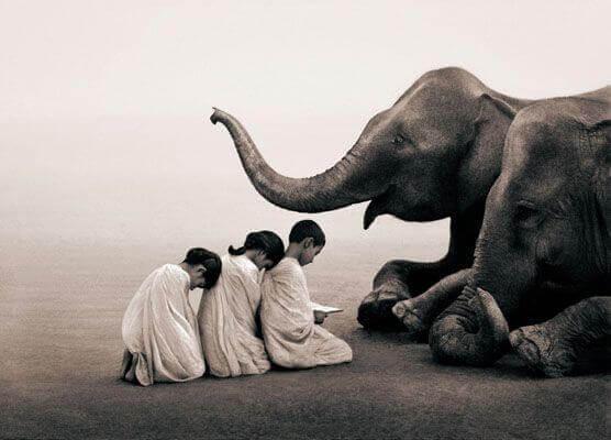 criancas-com-elefante
