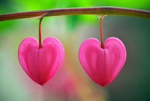 Flores No Deserto Um Conto Que Ajudará Você A Reconhecer O Amor