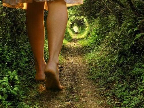 caminho-floresta