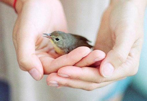 Dar amor a estranhos ajuda a superar a depressão