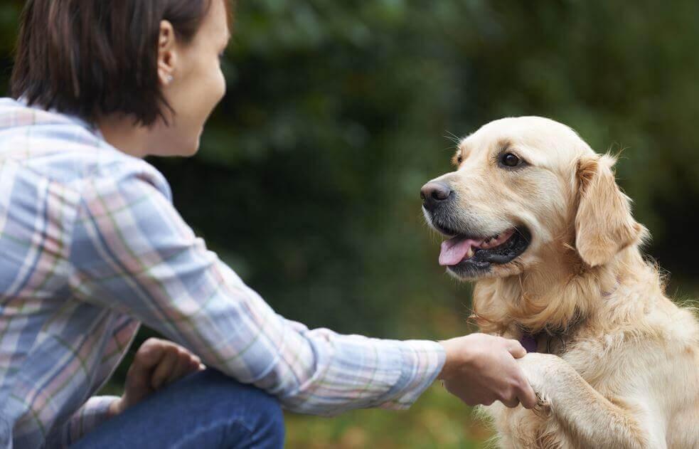 Sabe como os cães reconhecem o nosso rosto?