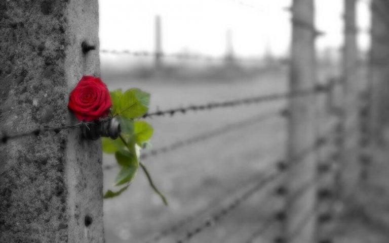 O luto é uma despedida com amor