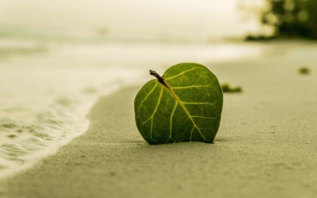 folha-coracao