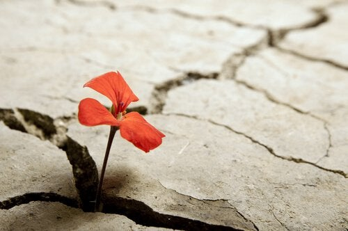 enfrentar-adversidade