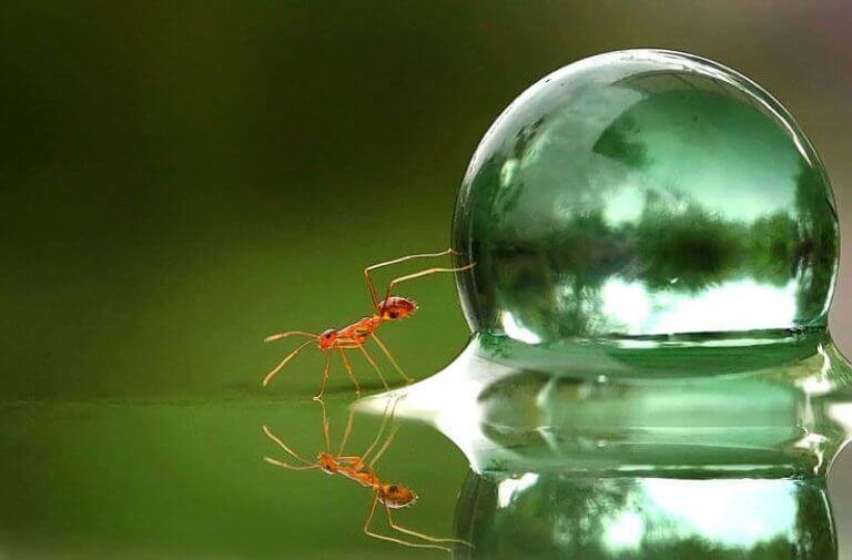 formiga-bolha-de-agua