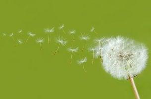 A maneira mais linda de fluir é deixar ir