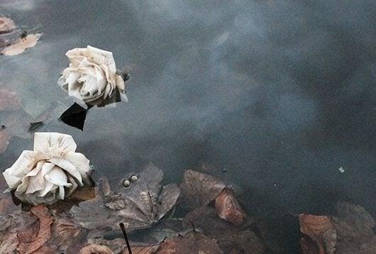 rio-com-flores