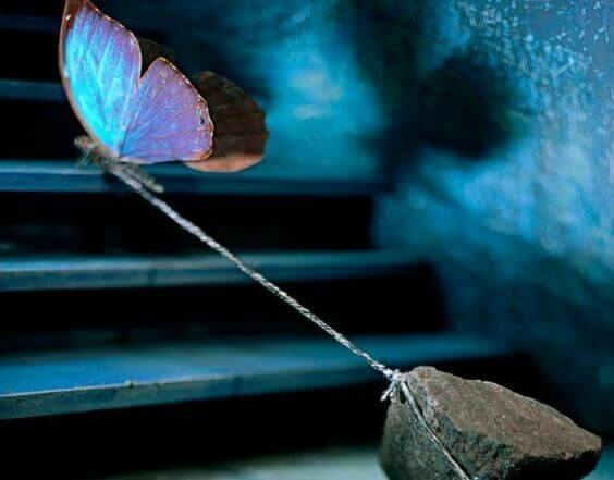 borboleta-puxando-pedra