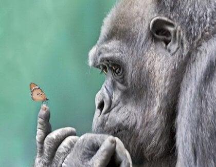 gorila-com-borboleta-no-dedo
