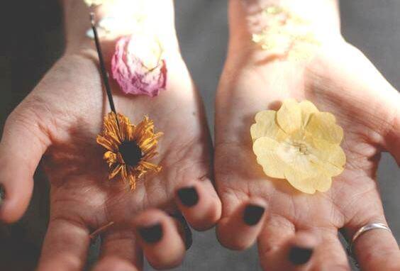 maos-com-flores-secas