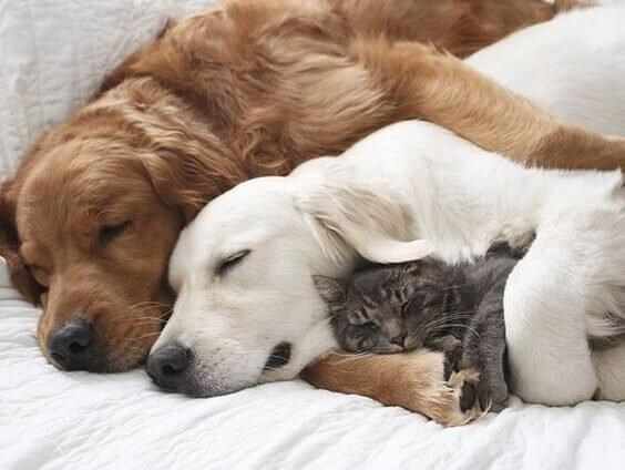 caes-e-gato-dormindo-juntos