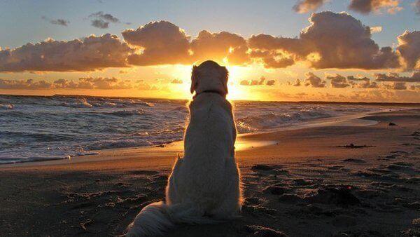 O que os cães podem nos ensinar sobre os nossos problemas?