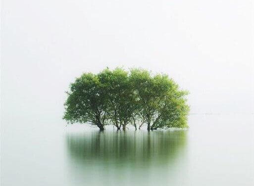 arvores-inundadas