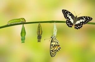 Desafios, o caminho para a transformação
