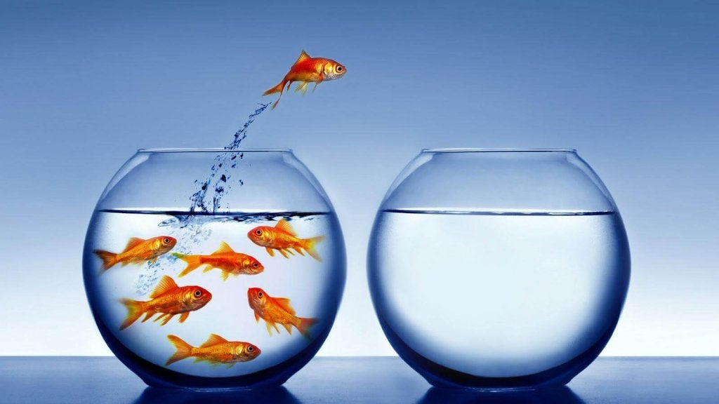 peixes-aquarios