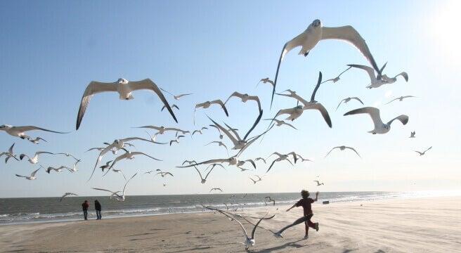passaros-voando-praia