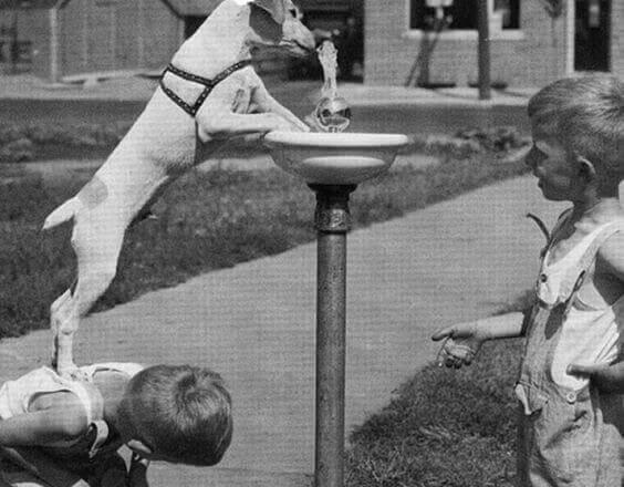 amigos-caninos