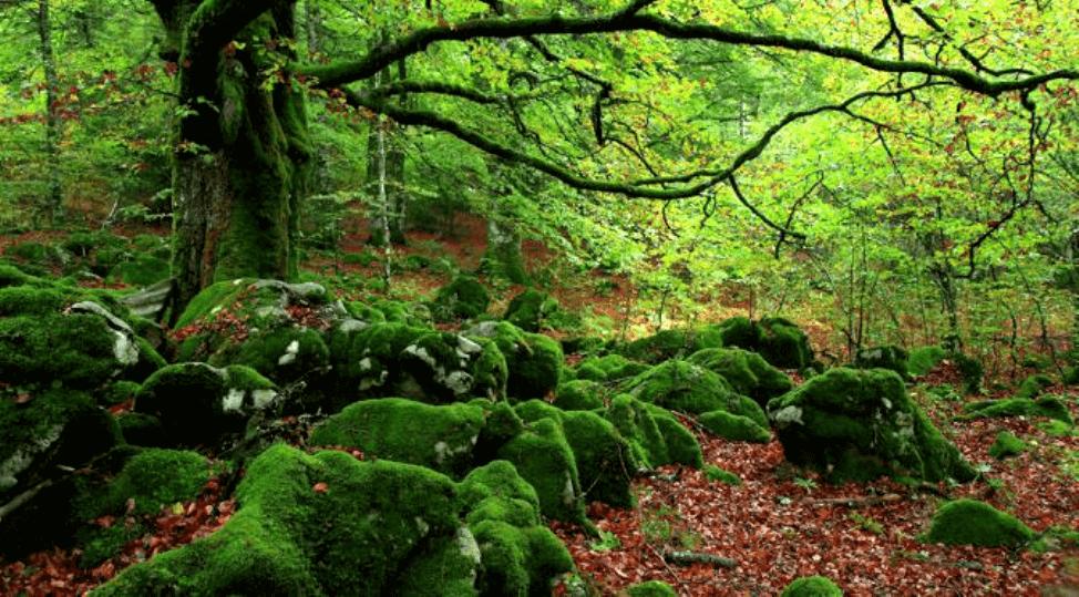 Banho de floresta, um antídoto contra o estresse
