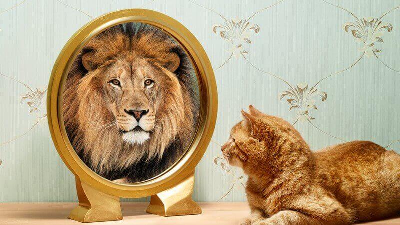 Ter coragem e autoconfiança