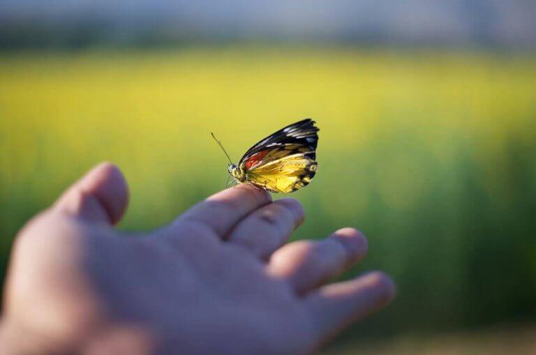 Borboleta em dedo da mão