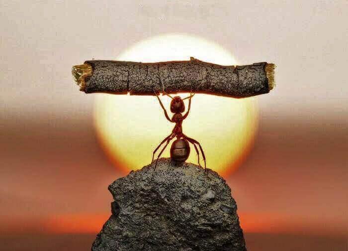A formiga é um símbolo de persistência