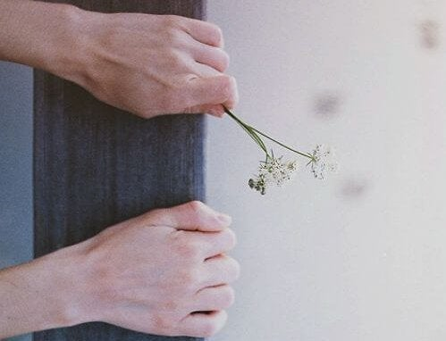 maos-segurando-flor