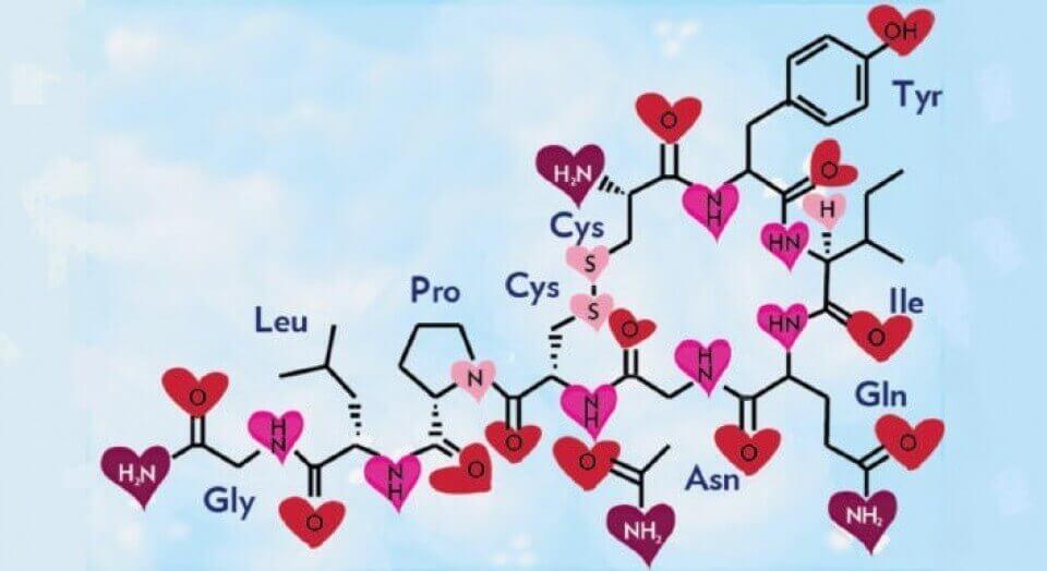Oxitocina, o hormônio do amor e da felicidade