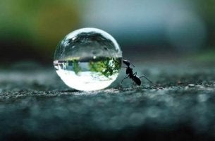 A persistência dá fôlego aos sonhos