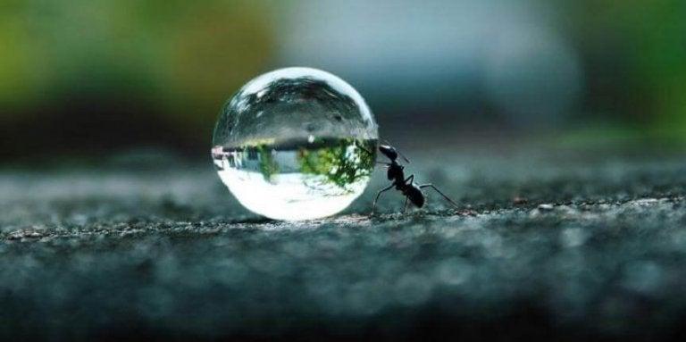A persistência é o fôlego dos sonhos