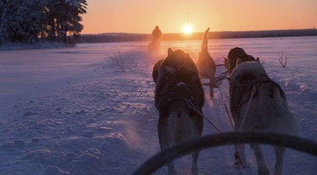 Inverno na Finlândia