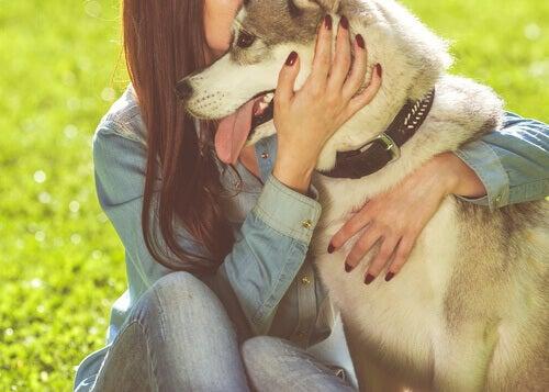Os animais nos ajudam a tolerar o desconforto